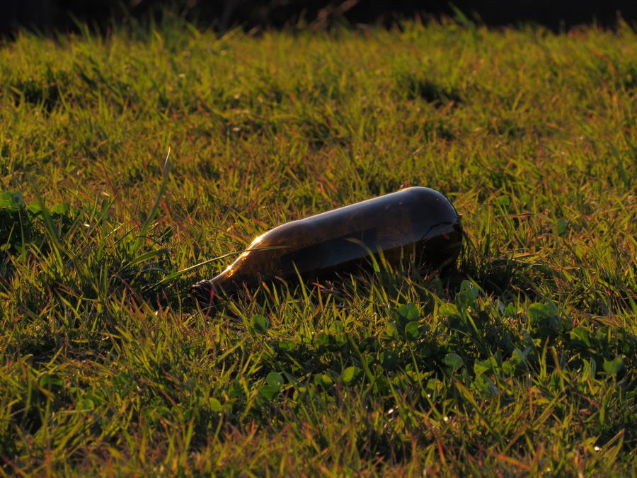Alcohol Alcohol Bottles Alcoholism Bebado Betrunken Borracho Botellon Bouteille Day Drunken Flasche Grass Grassland Grassy No People Open-air Party Outdoors Selective Focus Side View Surface Level бутылка زجاجة ボトル 瓶子 酔っぱらい