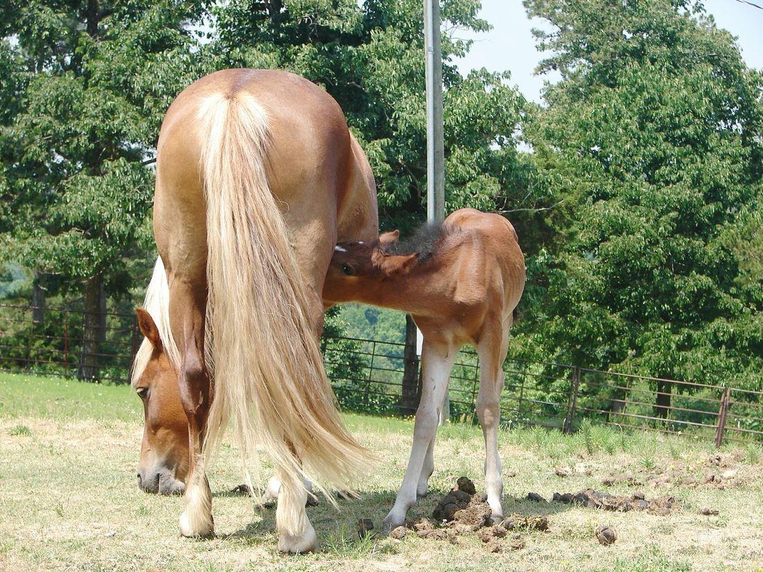Horsing Around Horses Beautiful ♥ Mama Baby Harriet Arkansas Arkansas_ozarks
