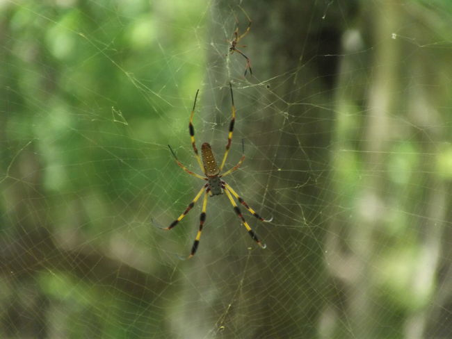 Arachnid Banana Spider Beauty In Nature Close-up Complexity Day Focus On Foreground Fragility Insect Natural Pattern Nature No People Outdoors Selective Focus Spider Spider Web Tranquility Web