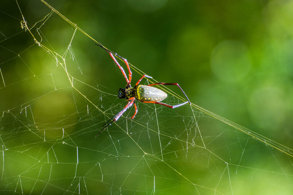 Beautiful stock photos of hunting, Hunting, animal Themes, animals In The Wild, arachnid