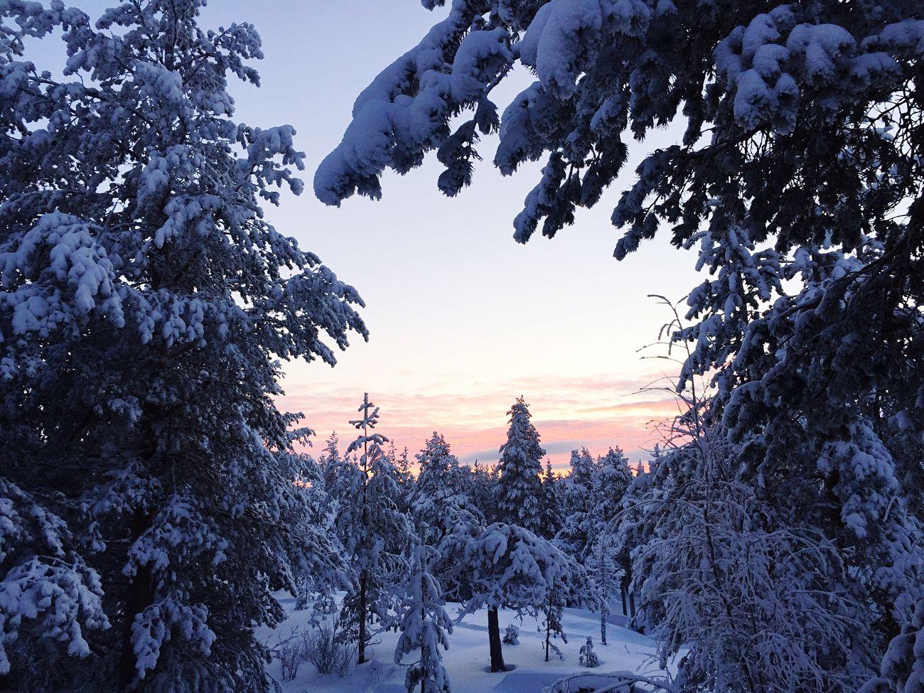 Gün doğmasıyla batması bir olan ülke 🙃 Finland Winter Snow Cold Temperature Nature Beauty In Nature No People EyeEm Nature Lover EyeEm EyeEm Gallery EyeEmBestPics EyeEm Best Shots - Landscape Sunset Hanging Out Lapland Lapland, Finland Rovaniemi Taking Photo
