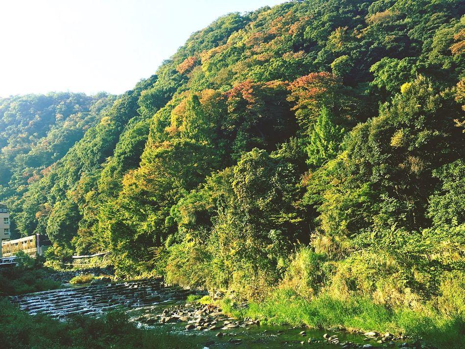 """""""箱根湯本から""""From Hakoneyumoto River Forest Nature Hakone Hakoneyumoto 箱根湯本 はこね Hot Spring Resort EyeEm EyeEm Best Shots First Eyeem Photo Eyeemphotography Japan Photography The Week Of Eyeem"""