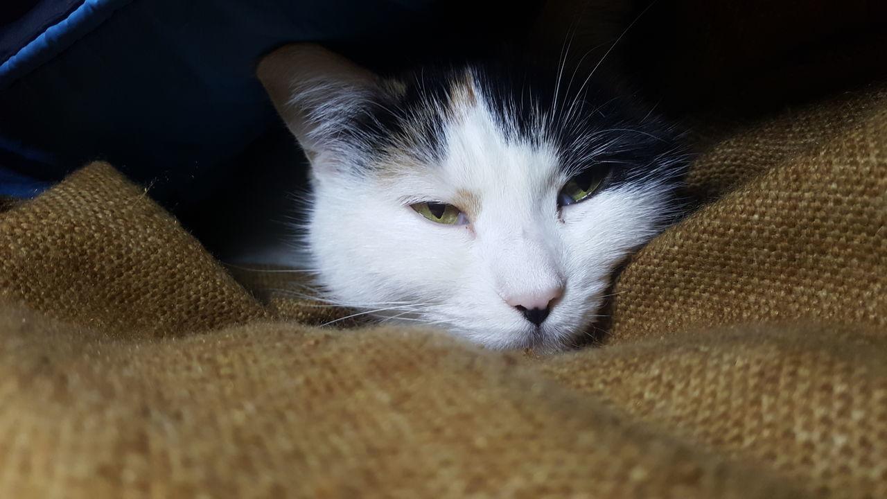 Mycat Boncuk Huzur Masumiyet Mutluluk Mutluluksebebim Dostlar Cat Cats I Love Cats Cat Lovers Photo Hasangulbek 2016 Türkiye