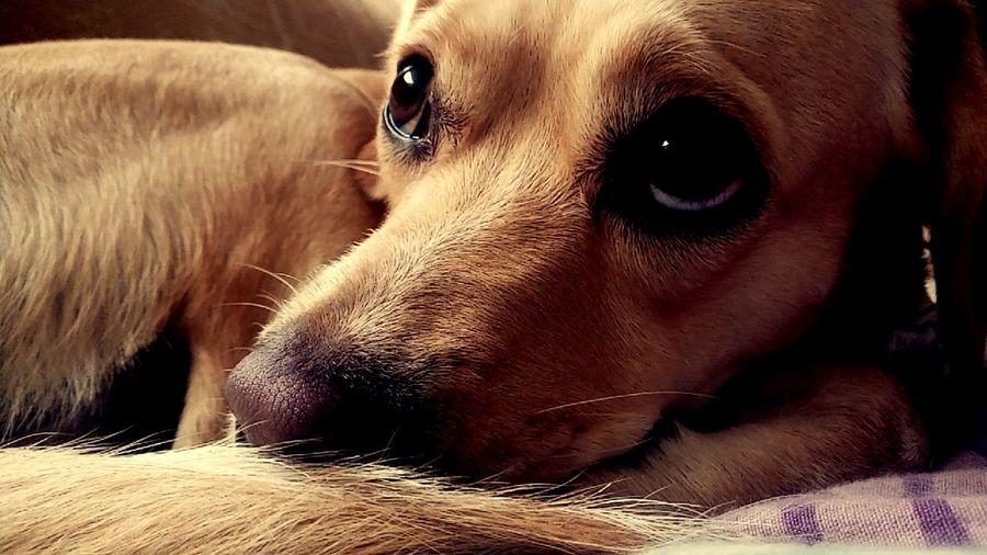 Bambi💙 Pets Doggie Mybabylove Lima, Peru 2k17 Perù 🇵🇪 Pets Of Eyeem One Animal No People Domestic Animals Dog Lima Bambi Lima-Perú MiHermosa Mybaby Bambi 💚 😚