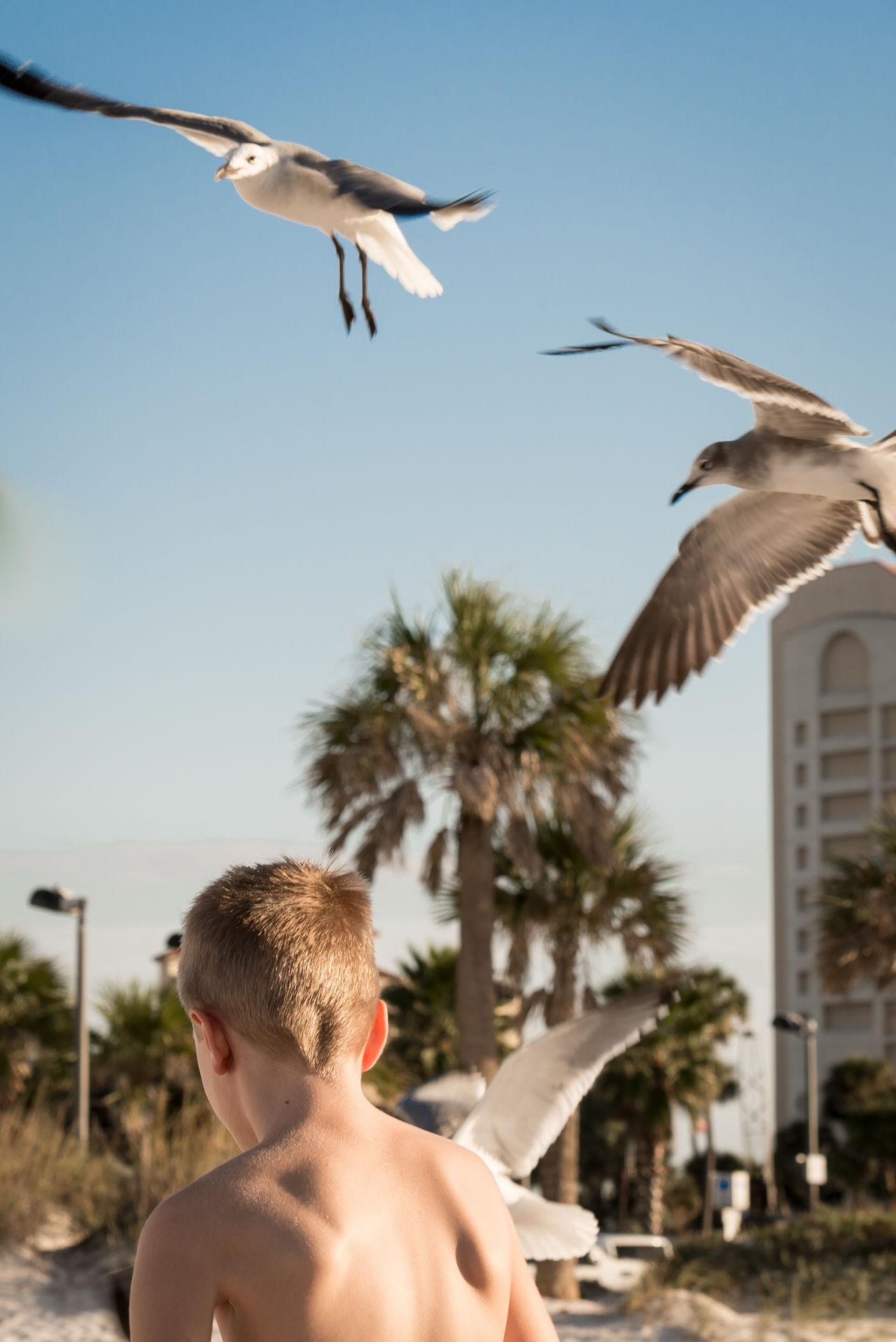 Beautiful stock photos of summer, Animal Themes, Animals In The Wild, Beach, Bird