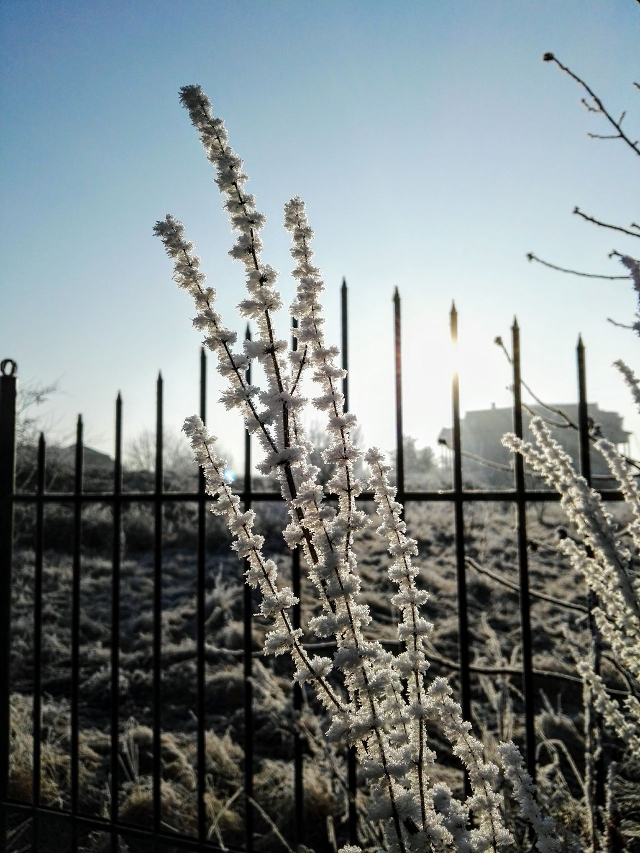HuaweiP8 No People Outdoors NatureBeauty In Nature Tranquility Day Scenics Winter Cold Temperature Frosty Frosty Mornings Frosty Days Cold Days Sunrise Workplace