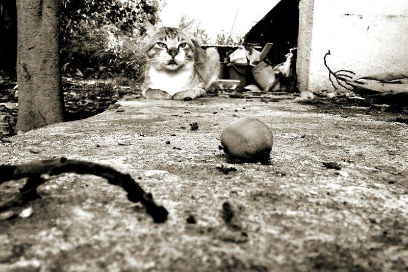 Animal_collection Cat Lovers Catoftheday Blackandwhite Photography Popular Photos Open Edit Pictureoftheday Eyem Best Shots Morning Walk Picoftheday #photooftheday #photography #iphonesia #pikturdis #WeAreTheCulture #jj_forum #webstagram #world #streetstyle #shootinupny #statigram #randomfreshness #tbt #twitter #nycphotography #nyc #les #igdaily #everybodystreet #vsco #streetphotography #s