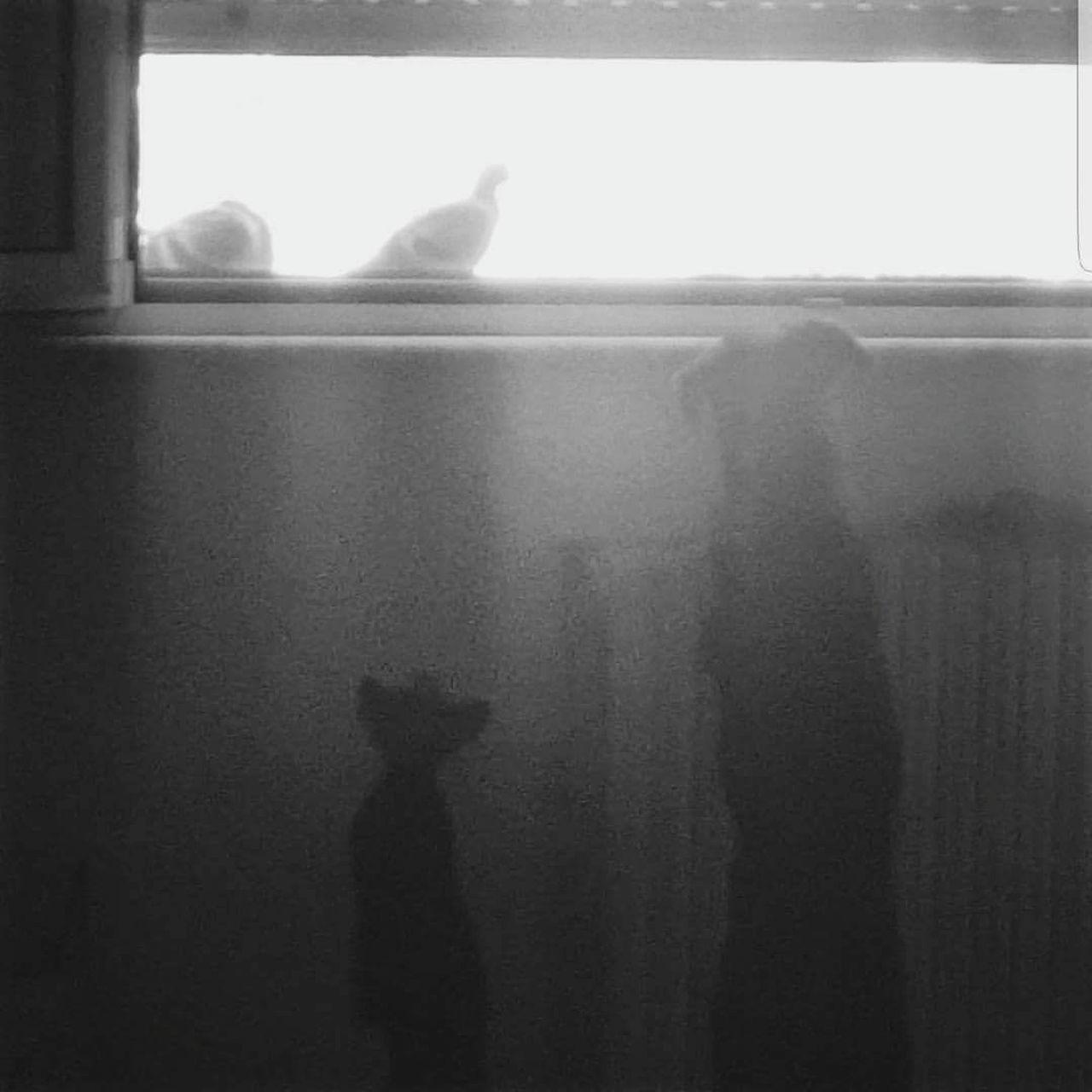 Catanddog Cat Dog Friendship Friends Combinaguai  Love Animal Themes Pets Eyemphotography Eyem Vision Samsung Galaxy S6 Edge