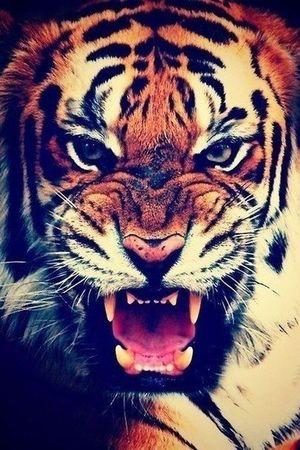 Animals Lion Sauvage World Cute Photography Photo Photooftheday Photographer