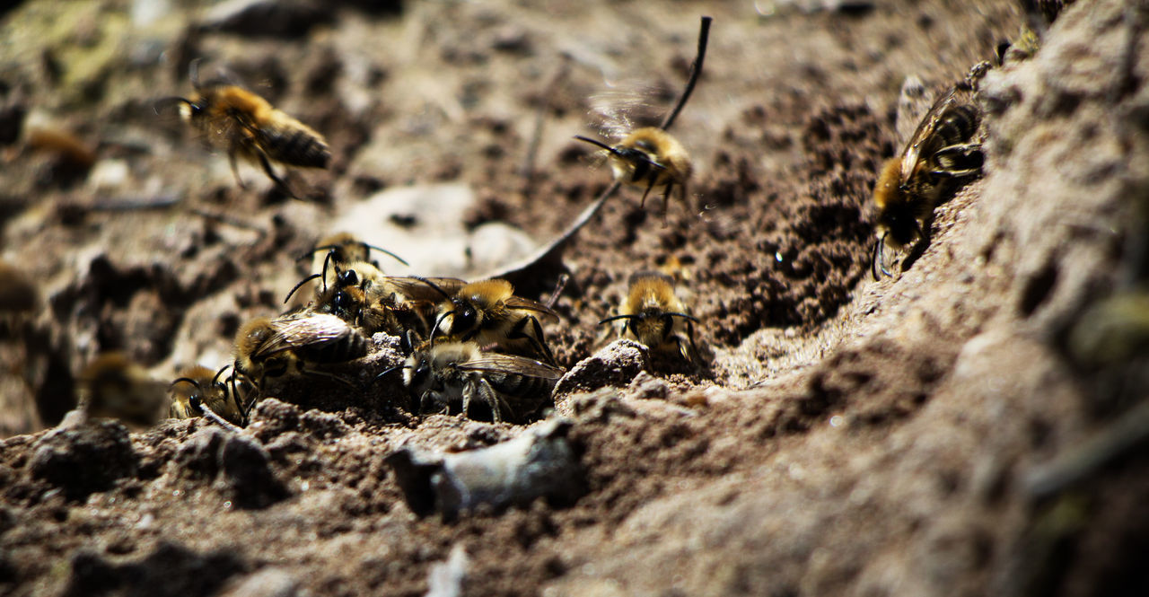 animals in the wild, animal themes, insect, bee, beehive, honey bee, animal wildlife, selective focus, apiculture, wildlife, outdoors, honeycomb, one animal, close-up, day, no people, nature, colony