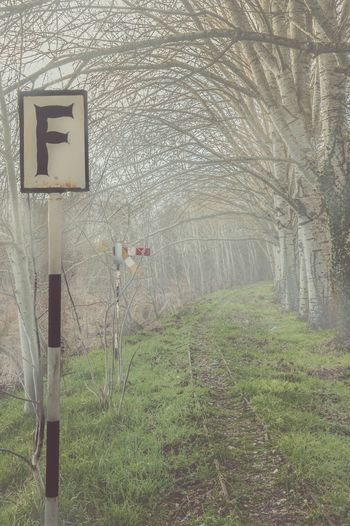 Foggy Dramatic Mistery Landscape No People Direction Tree Nature