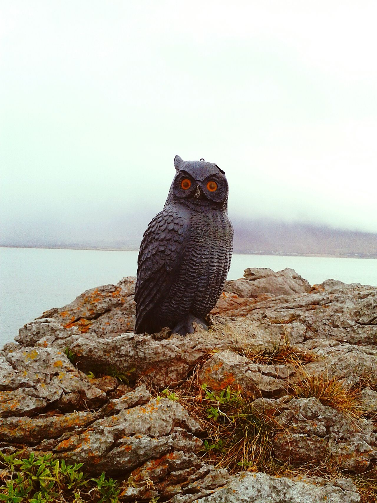 Beautiful stock photos of eule, Animal Themes, Animals In The Wild, Balance, Bird