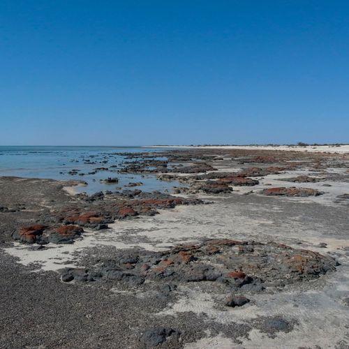 Australia Beach EyeEm Best Shots EyeEm Nature Lover EyeEmBestPics Nature O2 Ocean Oxygen Sand Sea Shore Sky Stromatolites Water WesternAustralia