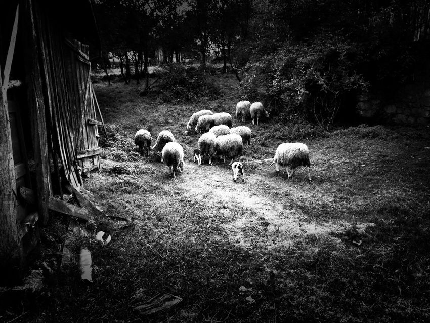 I am not afraid of an army of lions led by a sheep; I am afraid of an army of sheep led by a lion. Alexander the Great Blackandwhite AMPt_community Eye4photography  EyeEm Best Shots EyeEm Ready