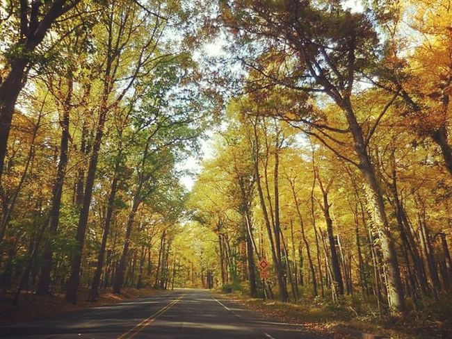 Traveling 🍁 Nature Beauty In Nature Road Outdoors Scenic Drive Photography Newjersey Landscape_photography Photooftheday EyeEm Gallery Autumn Growth Trees Nature Photography