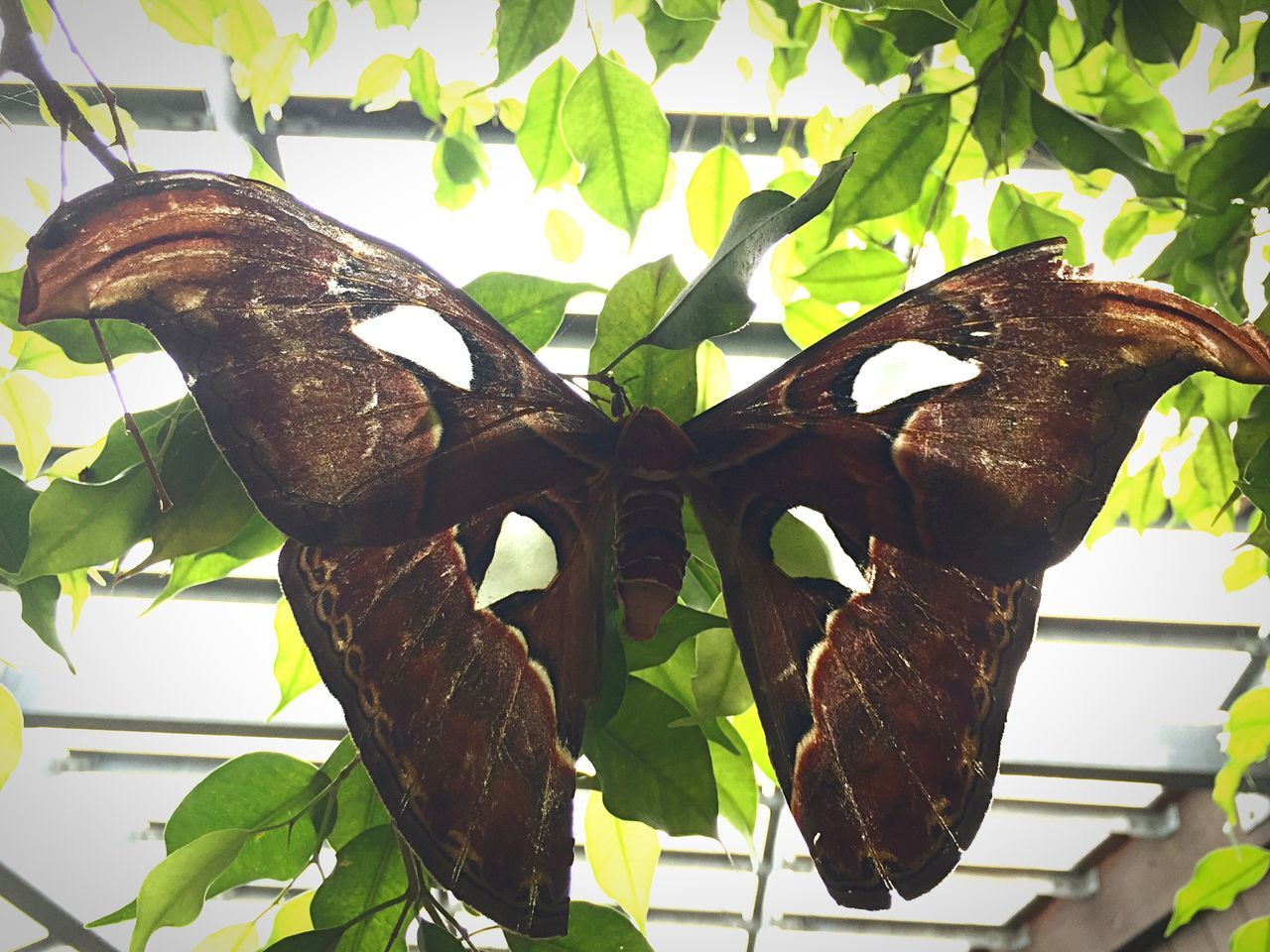 Thebutterflyplace Taking Pictures Butterfly Evolved Transparent Travel