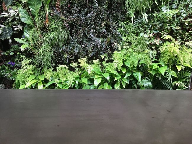 Concrete Leaf Plant Growth Green Color Nature Tranquility Day Outdoors Beauty In Nature Growing Tranquil Scene Freshness No People Lush Foliage Botany Scenics Plant Life