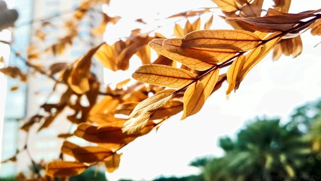 Winter leaves. <3 Winter Leaves Colors Weather