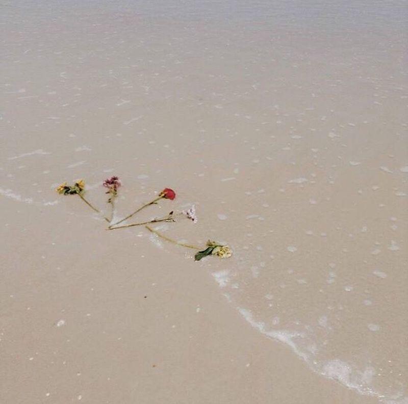 drift Swept Away Drift Flowers Beach Flagler Beach, Florida