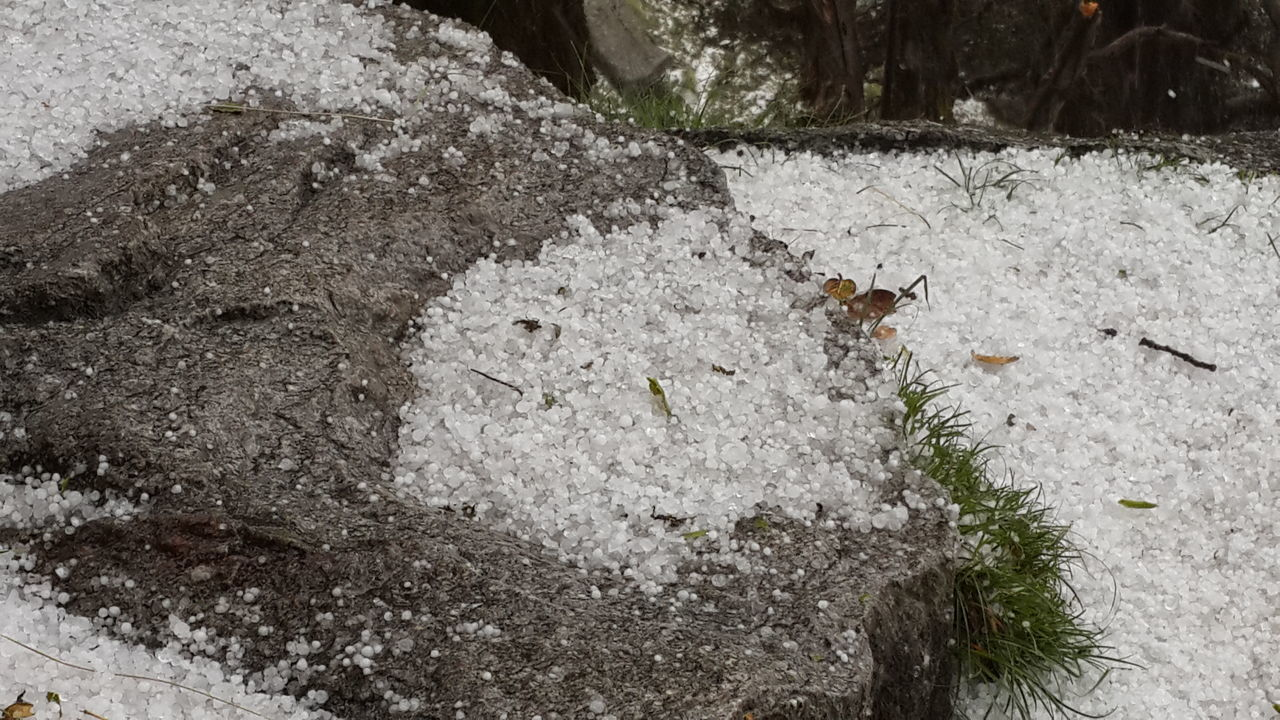 Ice Pearls Hailstorm Cold Weather Himalayan Range SnowLineCafe Trekking Dhauladhars Mcleodganjdiaries Himachalpradesh India Feel The Journey