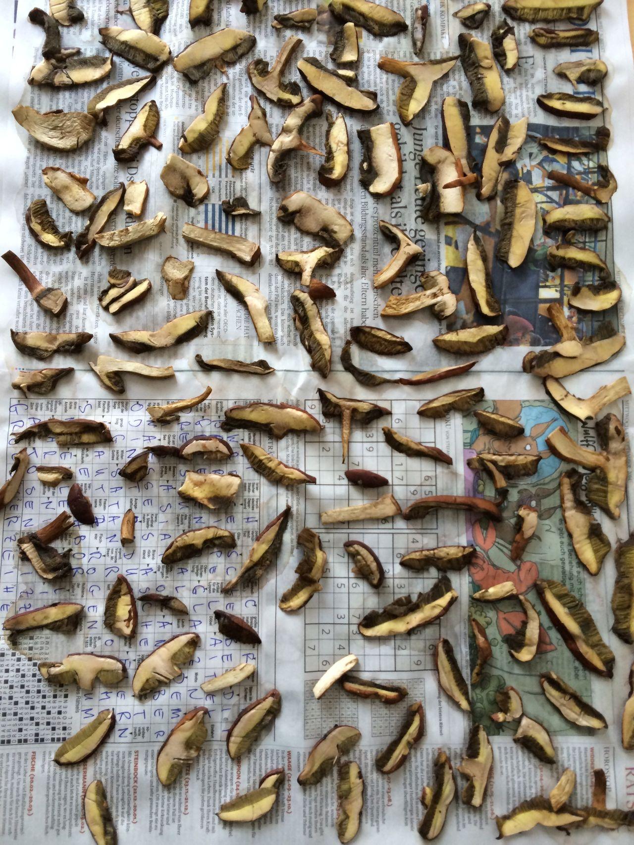 drying Mushrooms at home