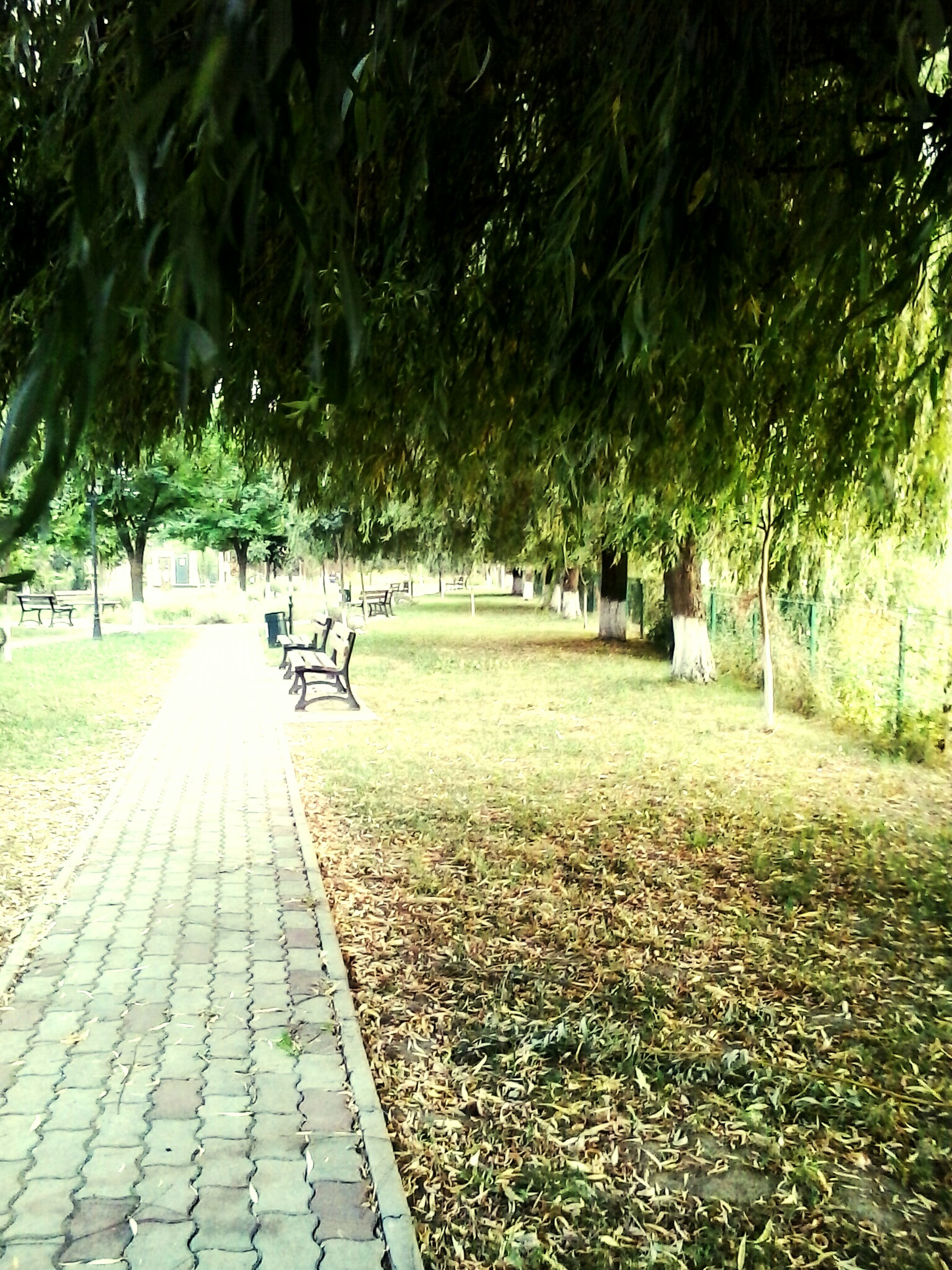 grass, tree, park - man made space, footpath, shadow, green color, growth, sunlight, park, lawn, nature, grassy, walkway, bench, the way forward, tranquility, pathway, outdoors, day, incidental people