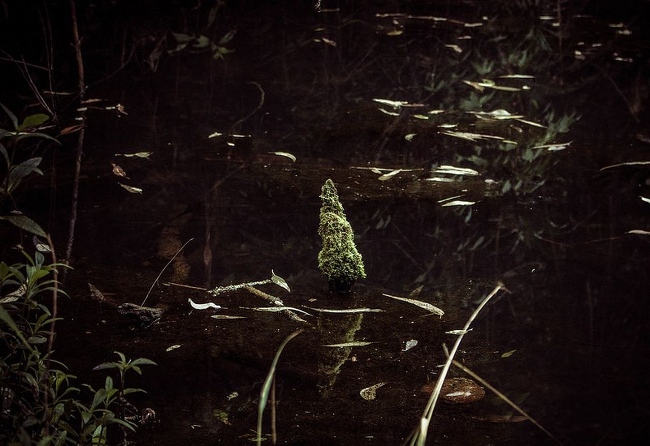 Nature No People Beauty In Nature Branch Plant Cold Temperature Outdoors Tranquility Winter Close-up Moss Lake Macro Landscape Folk