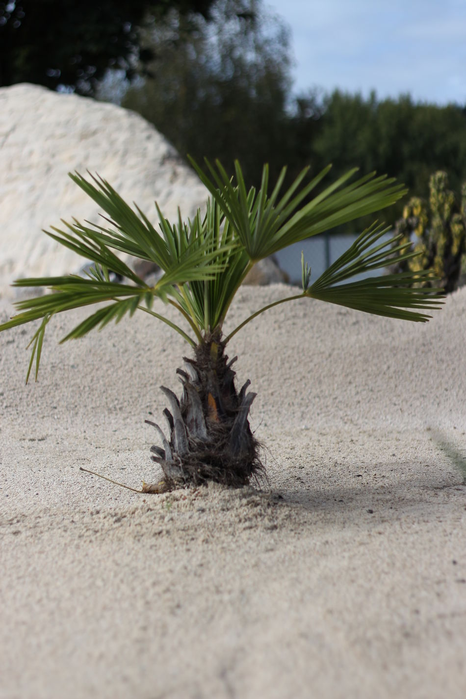 Plant Potted Plant Focus On Foreground Outdoors Green Beauty In Nature Tropical Tree No People 50mm Beauty In Nature Desert Close-up Leaf Minimundus