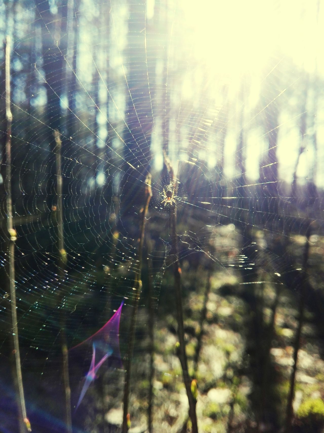 Nature Drop Spider Web Focus On Foreground Close-up Day Fragility No People Beauty In Nature Outdoors Web Freshness
