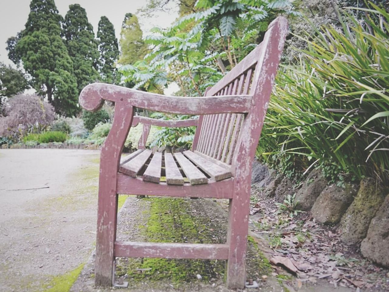 wood - material, no people, tree, day, chair, outdoors, growth, nature, grass, beauty in nature, close-up