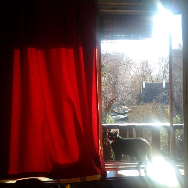 Mycat Red Curtain Sunshine Spring Has Arrived Window View MyRoom Red Black Cat Obuda Home Little Garden Chimneys