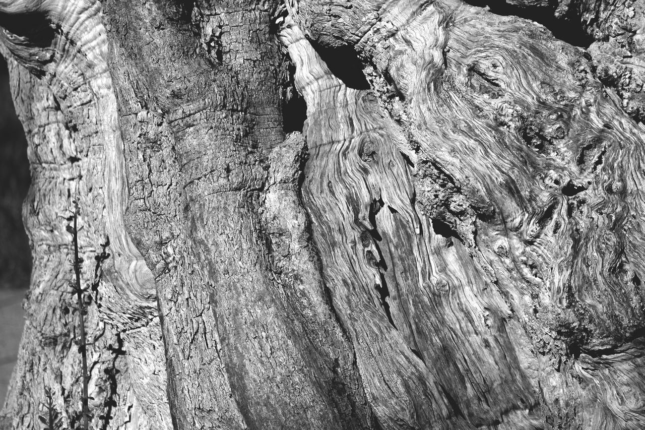 Abstract Background Photography Backgrounds Bark Beauty Blackandwhite Blavk And White Close-up Cracked Day Full Frame Growth Knotted Wood Nature No People Old Tree Old Tree Trunk Olive Tree Outdoors Rough Textured  Tree Tree Stump Tree Trunk Trunk