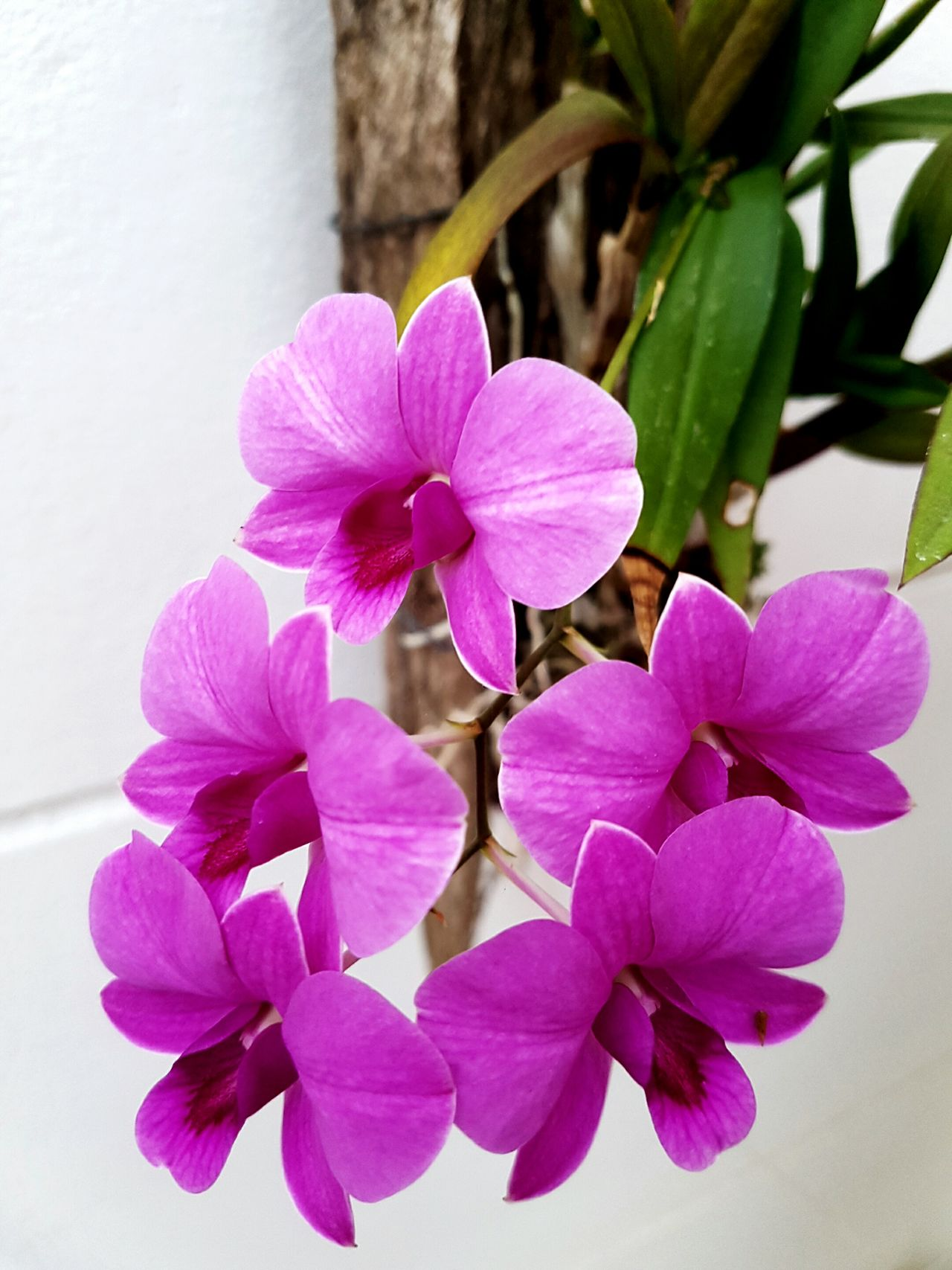 Flower Close-up Purple Beauty In Nature Flower Head In Bloom Orchid Blossoms Orchids In Bloom Orchids Collection Orchid Collection OrchidLover Orchid Flowers Flower Photography Flower Collection Flowers 🌸🌸🌸 Flowers, Nature And Beauty Blossom Beauty In Nature Enjoying The Moment Nature Makes Me Smile Nature Colors Capture The Moment