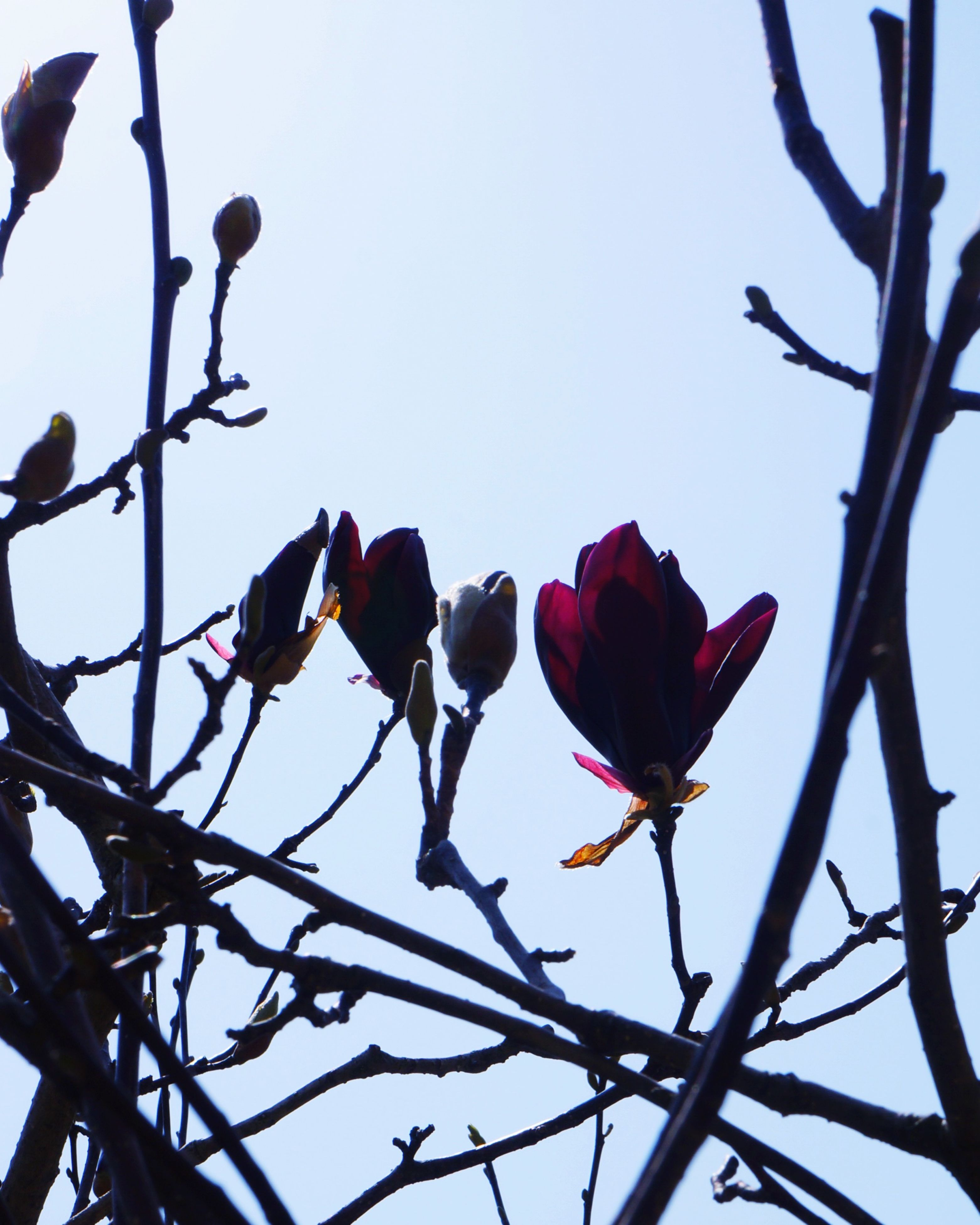 low angle view, clear sky, bird, flower, branch, nature, blue, animal themes, fragility, sky, beauty in nature, perching, freshness, day, growth, outdoors, no people, red, wildlife, animals in the wild