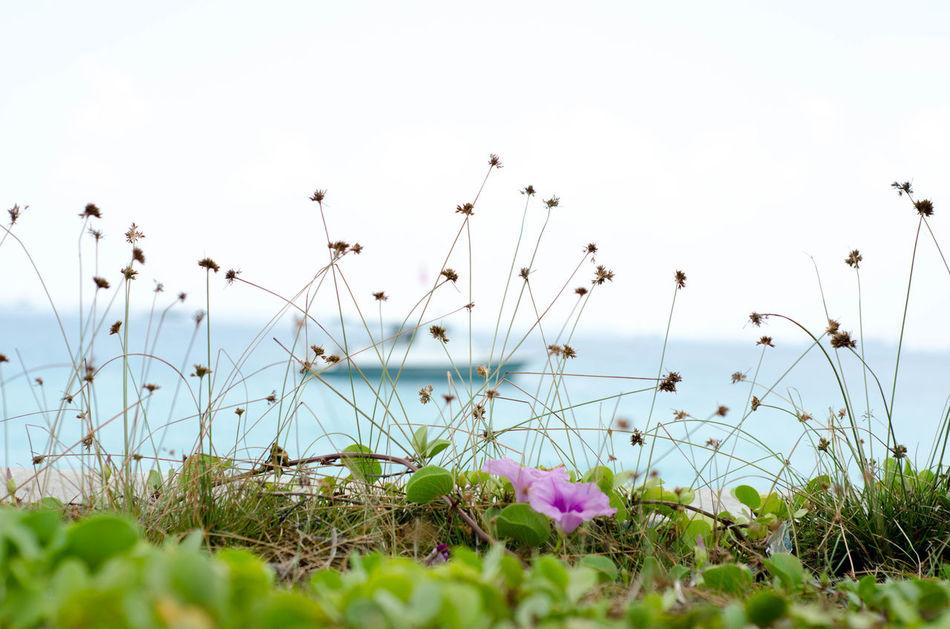 Coastal Waters Ocean View Topical Photooftheday Maldives Nikon