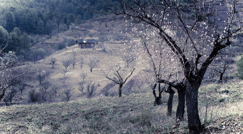 Almenros Beauty In Nature Day Landscape Mountain Napatu Nature No People Tree