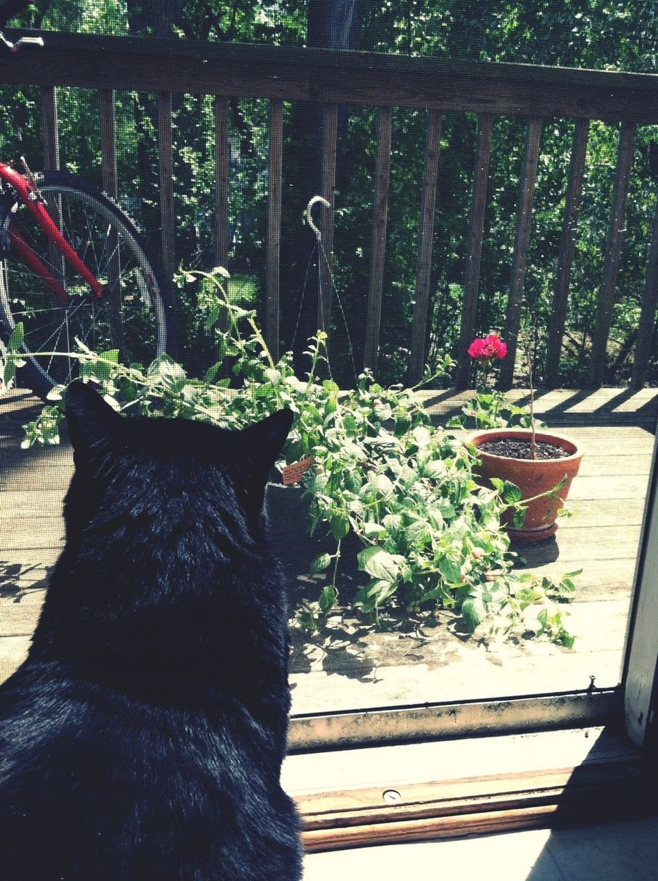 Getting Acquainted With The Fuschias And Geraniums