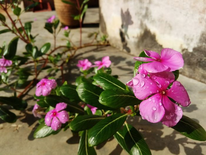 Growth Flower Nature Beauty In Nature Close-up Freshness Day Growth Outdoors Plant Beauty In Nature Plants And Flowers Purple Multi Colored Beauty Of Nature