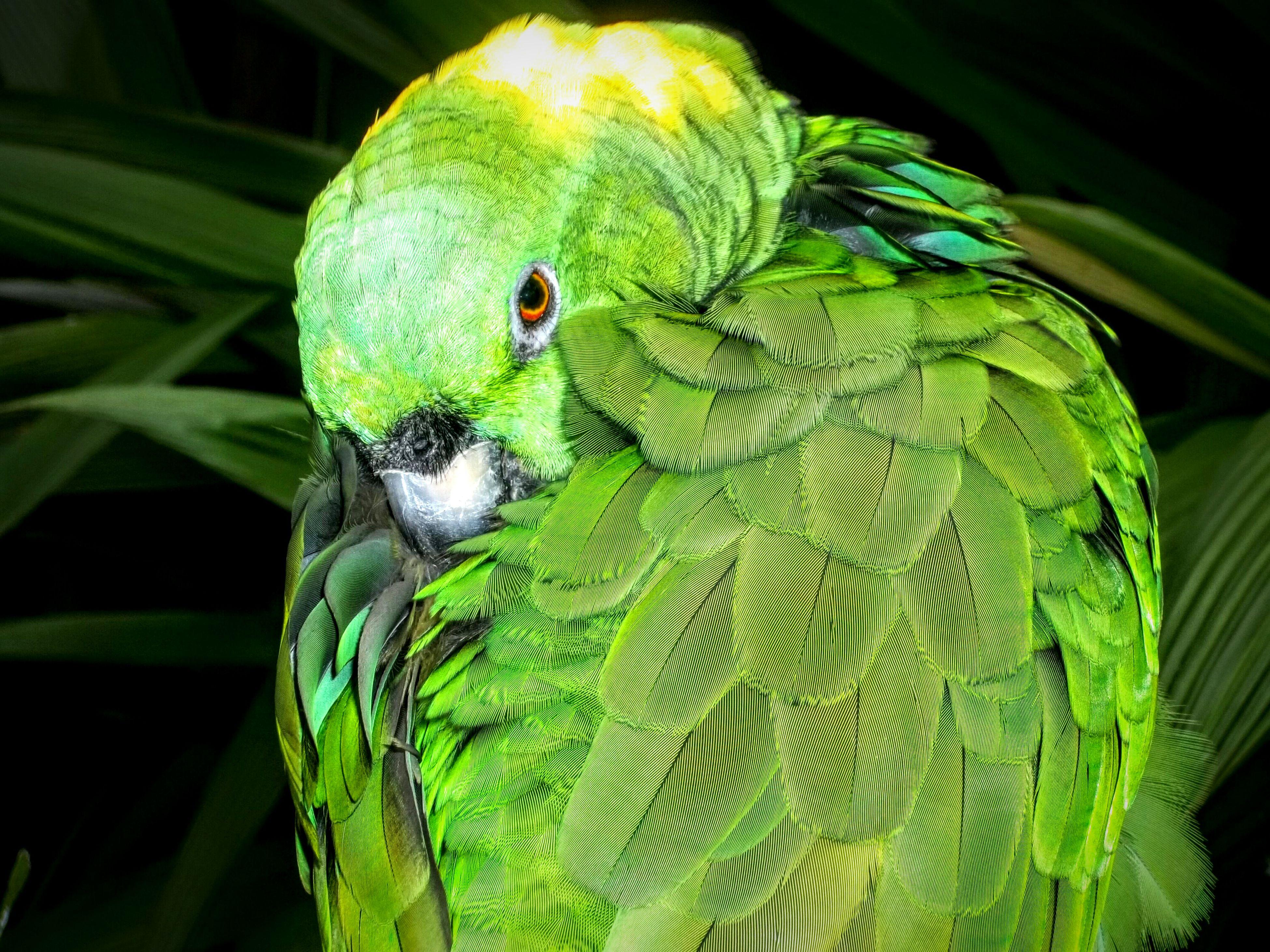 Protecting Where We Play Wildlife Photography Wildlife Exhibit Aviary Costa Rica