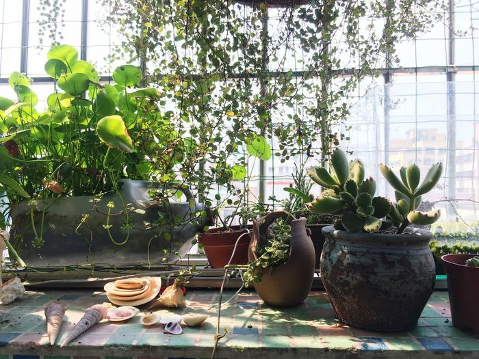 Growth Potted Plant Plant Nature Green Color Day No People Table Tree Leaf Planting Greenhouse Indoors  Beauty In Nature Close-up