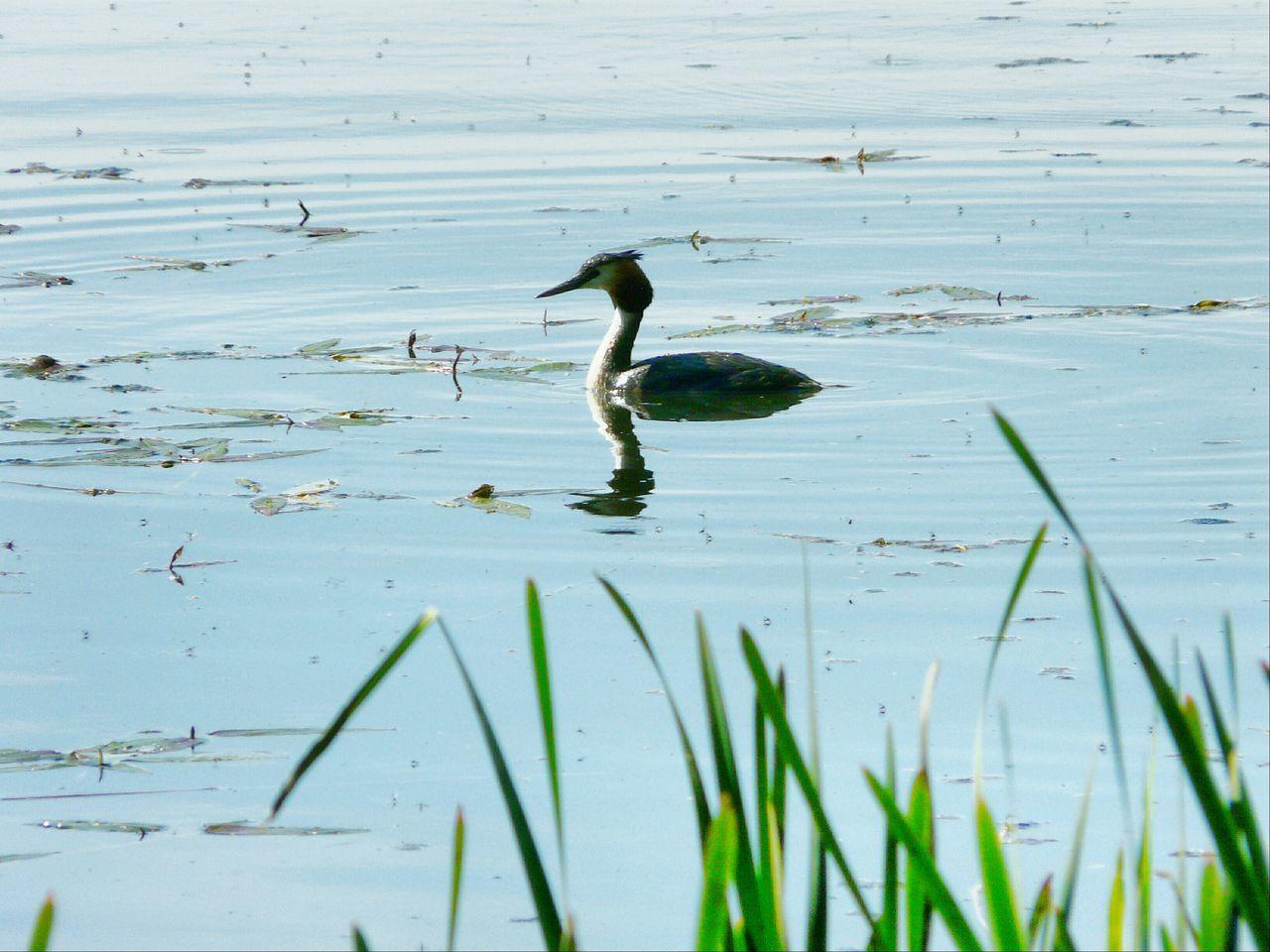 Bird In The Lake