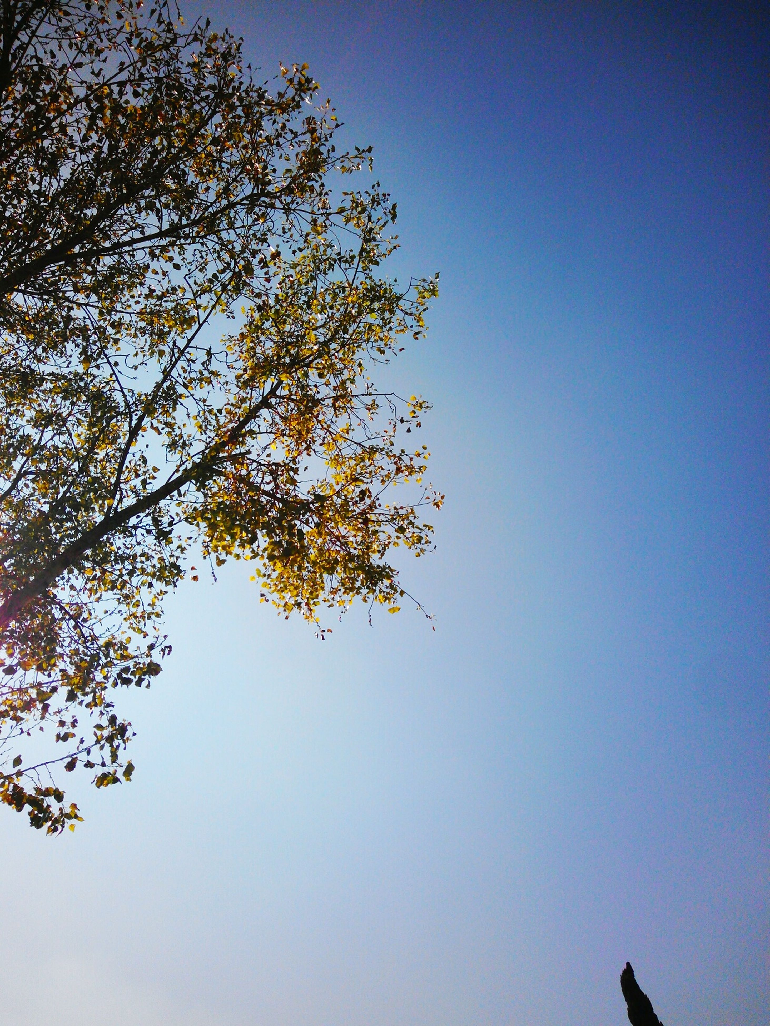 tree, low angle view, growth, nature, clear sky, no people, beauty in nature, sky, day, outdoors, branch, close-up