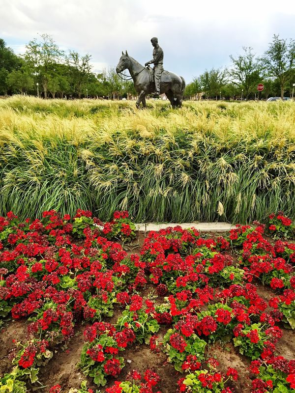 Will Rogers Statue Red Texas Tech University Lubbock Tx Vertical Composition