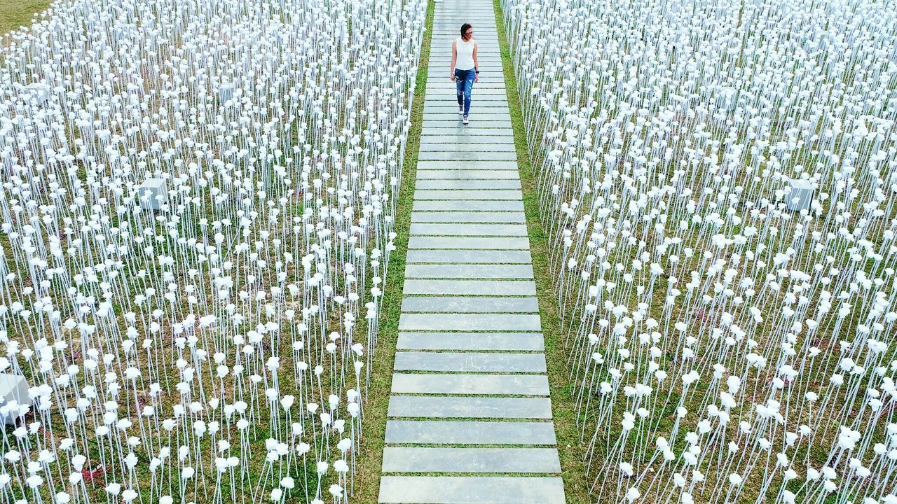 The City Light walking down the aisle of 10,000 Roses