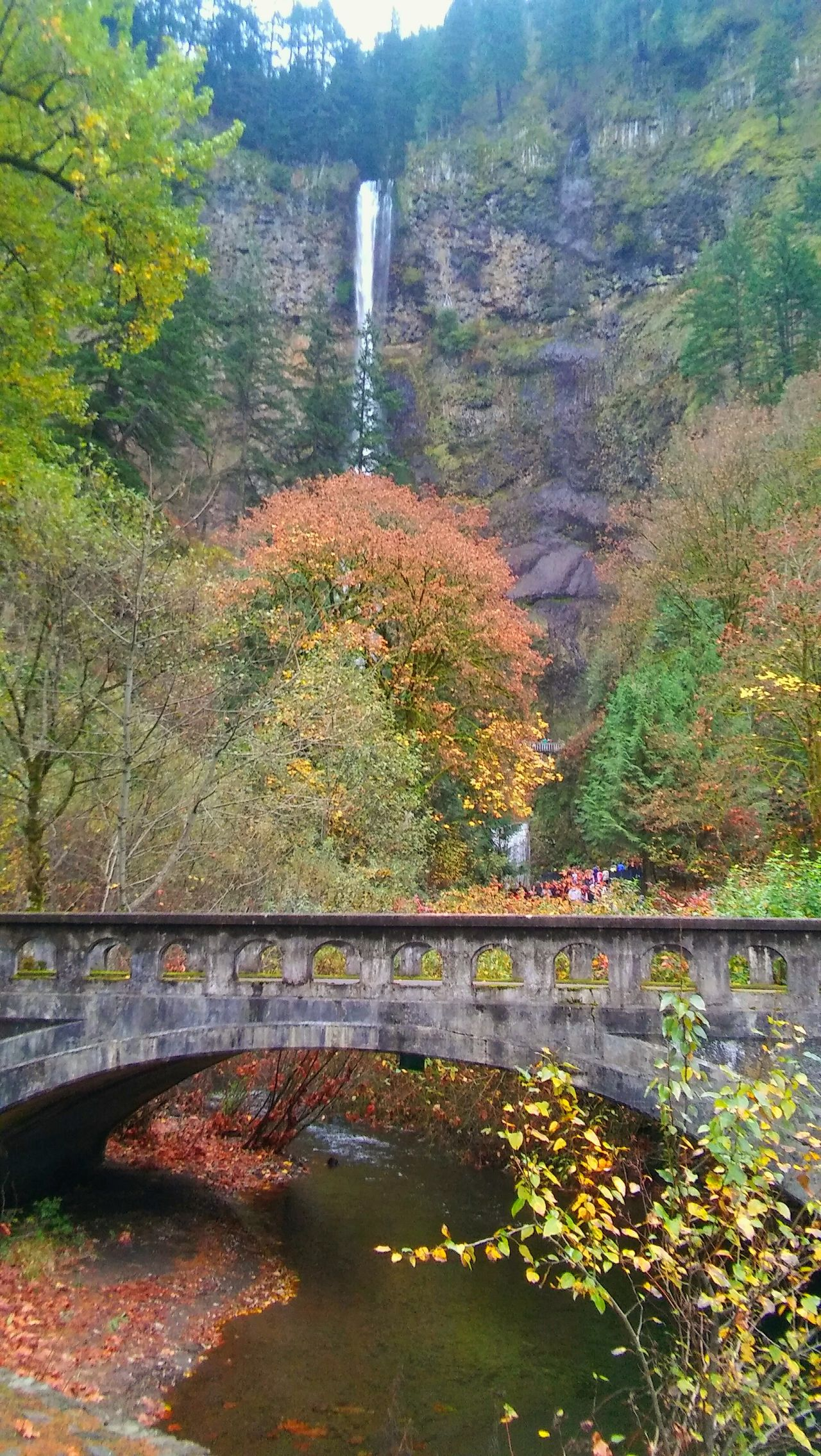 Travel Photography Trees Nature Landscape Oregon Columbia River Gorge Fall Colors Multnomah Falls