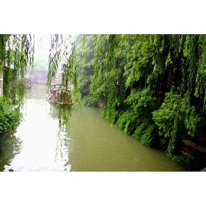 Lost in the green. 江南好 江南好 风景旧曾谙 江南 烟雨江南 乌镇 Wupengboat greentravel