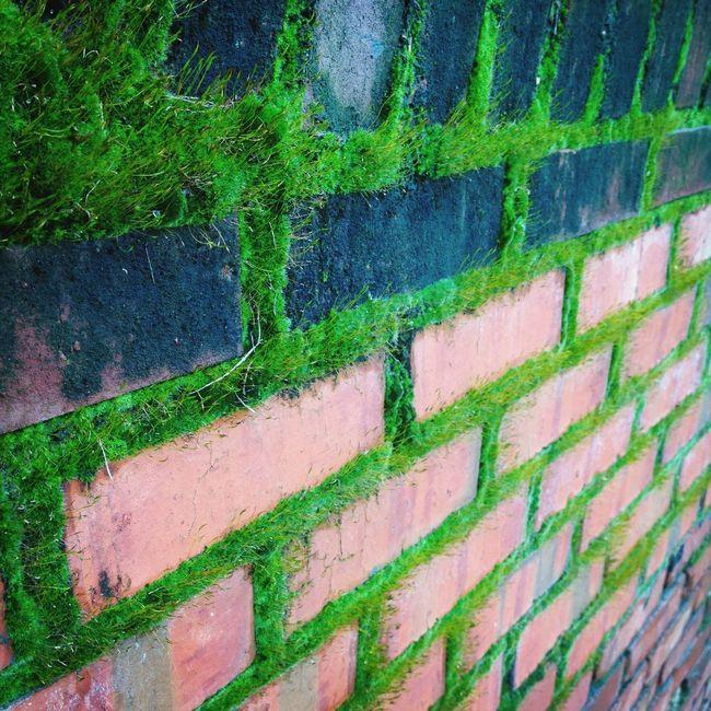 Lush neon green moss....im in heaven