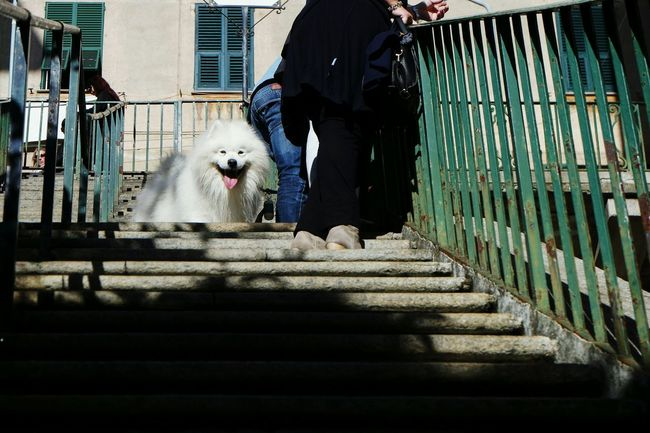 Hey... Are you looking at me?!? Domestic Animals Pets One Person One Animal Mammal Dog Lifestyles Cage Steps Person Adult Staircase One Man Only Indoors  One Woman Only People Horizontal Day Open Edit Fresh 3 EyeEm Best Shots Eye4photography  Streetphotography Street Photography Streetphoto_color