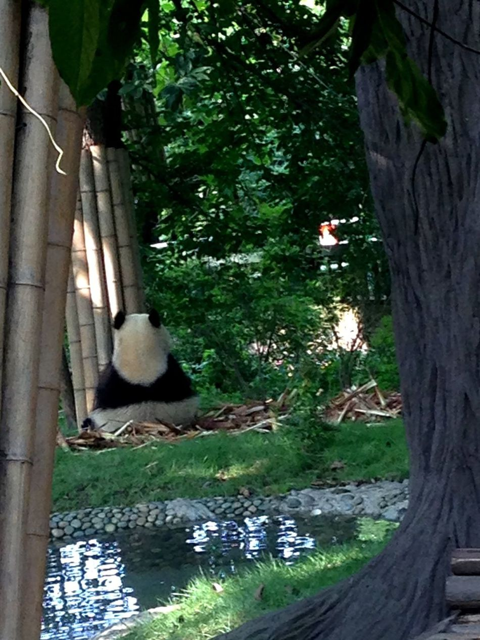 Check This Out Mr. Or Miss Panda?
