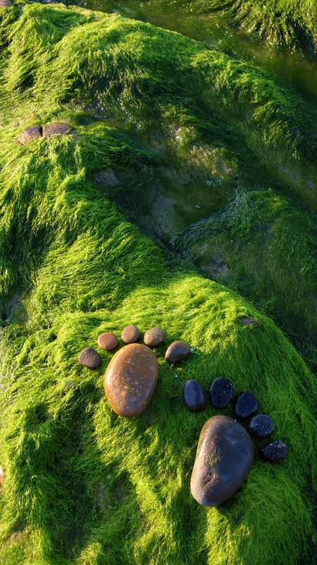 Couple of foot by pebble on green seaweed background, amazing concept of feet on alga surface, art product at seaside Alga Art Beach Boulder Couples Feet Foot FootPrint Fun Green Nature Paw Paws Pebble Pebbles Rock Rock Background Rocks Seashore Seaside Seaweed Steps Stone Summer Summertime